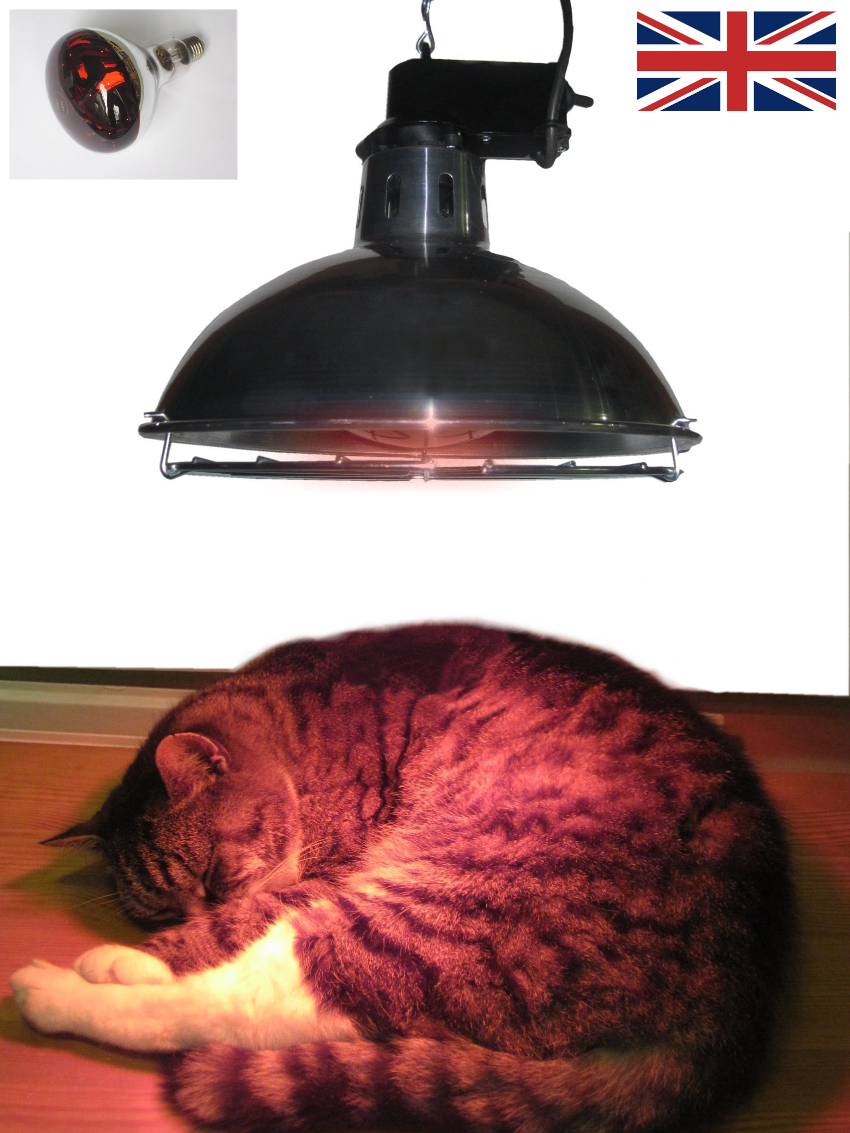 Leisure Heating Pet Heater with 250W Ruby Lamp and 2 Heat Settings